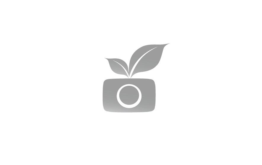 Gestaltung und Werbung für eine Fotografin auf dem Land: Logotype aus einem stilisierten Fotoapparat
